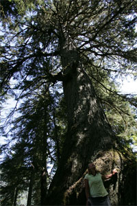 Old Cedars Tours and nature walk